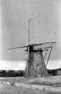 Hollandi tuulik Nõrava külas Kiuste talus 1957 EVM